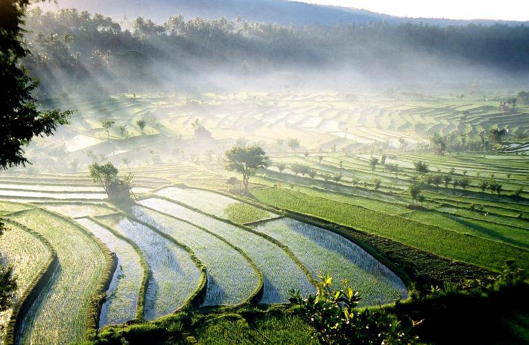 Chiang Mai, Rice Pattys