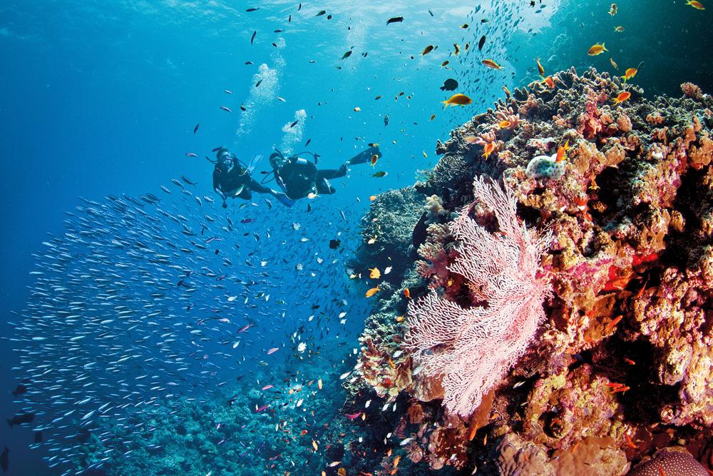 Koh Phangan, Scuba Diving